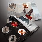 download gratis inspirasi contoh desain design brosur company profile profil 2